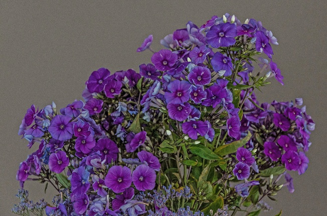 Lavandula_common_name_lavender_is_a_genus_of_39_known_species_of_flowering_plants_in_the_mint_family_Lamiaceae_Purple_lavender_flowers_FuoriSalone_Via_Tortona_Milan_Italy_VB