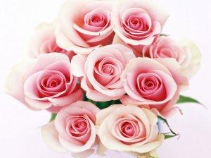 mazzo_di_rose_1024x768[1]