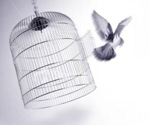aforismi-sulla-libertà-342x288-300x252[1]