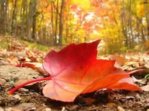 autunno-foglia-rossa-caduta[1]