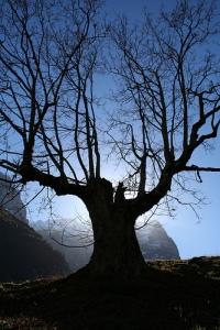 albero-secco[1]