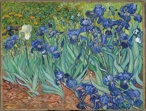 Van Gogh (iris)